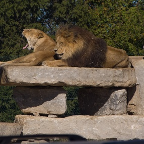 African Lion Safari, September 2007